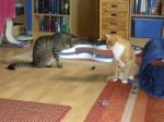 Mäuse hypnotisieren ...