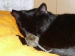 Selly hat sich mit einer Maus aus dem Trubel zurückgezogen !