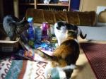 Lucy und Maja sind jetzt auch neugierig geworden !