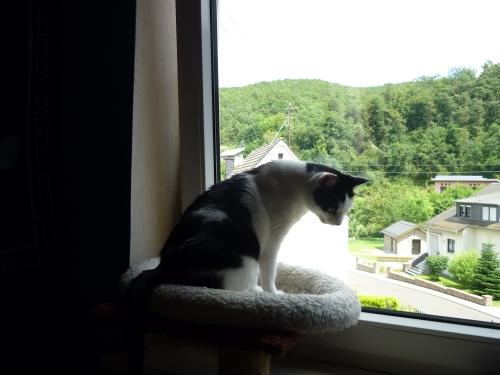 Lucy geniest den Ausblick !