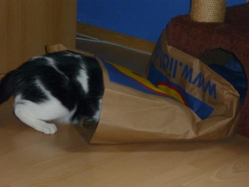 Erstmal gucken, ob Mama nicht doch noch welche von den Leckerlis in der Papptüte vergessen hat ...