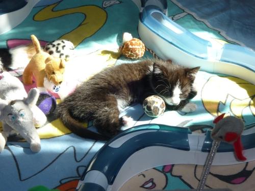 In der Sonne ausruhen und schlafen :)