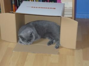 Kisten - Kater