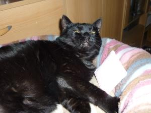Und Selly hat das kleine Schmusekissen direkt adoptiert :)