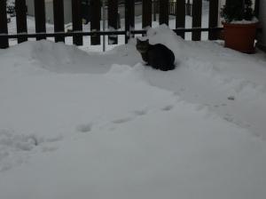 Milo hält nach dem Frühling Ausschau