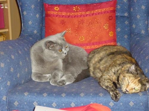 Charly und Gipsy auf Tuchfühlung
