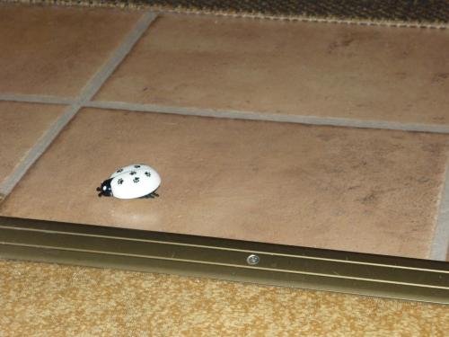 Was ist denn das ??? Ein Krabbelviech hat sich unerlaubterweise Zutritt zum 9-Katzenhaushalt verschafft !!!