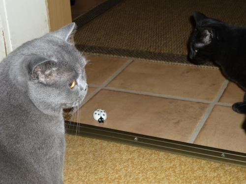 Max und Charly haben ihn zuerst entdeckt - und gucken doof aus der Wäsche ;)