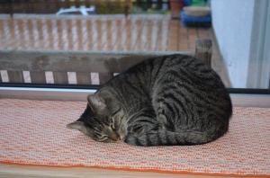 Und Milo hat sich seinen Schönheitsschlaf redlich verdient !!! Der hat nämlich jetzt endlich geschnallt, wie das mit der Katzenkappe funktioniert ( jubel, die Türöffner Zeiten sind endgültig vorbei ) und schlägt sich nun lange Nächte um die Ohren, wenn er draußen die Gegend unsicher macht, ähm, nach dem Rechten sieht ;)