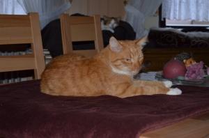 Der Benny, der ist ja der Rumtreiber schlechthin !  In einem frühreren Leben muss er mal ein Hamster gewesen sein, denn er ist immer Nachts aktiv, sprich, unterwegs - auch gut, so hab' ich dann wenigstens tagsüber was von meinem Kuschelknubbel :)