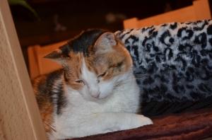 Maja hat es erfahrungsgemäß ihrem Alter entsprechend schon lange voll drauf : Schlafen und gleichzeitig niedlich aussehen :)