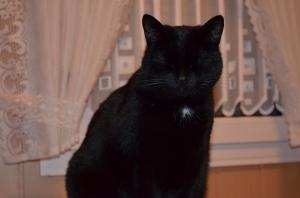... und zu guter letzt : Phoebe, die Katze, die ständig die Augen zusammenkneift !