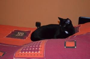 Betten auch belagert - hinten Max ...