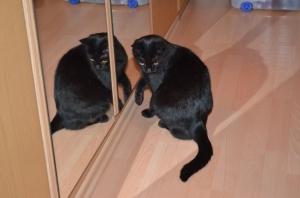 Klein Hummel holt sich Verstärkung von seinem Spiegel - Zwillingsbruder ;)