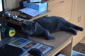 Auch am PC Schreibtisch herrscht die vollkommene Kontrolle !