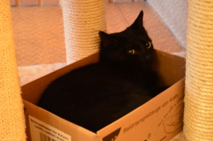 Oder kuschelt in seiner Lieblingskiste - noch passt er rein :)