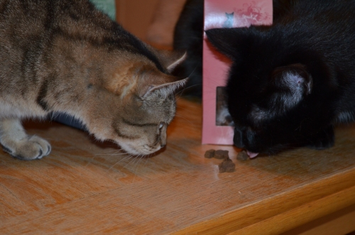 Max macht kurzen Prozess und putzte vor Samiras fassungsloser Miene alle weg ;)