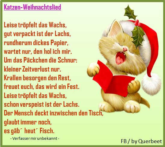 Frohe Weihnachten Katze.Frohe Weihnachten Aboutsevencats