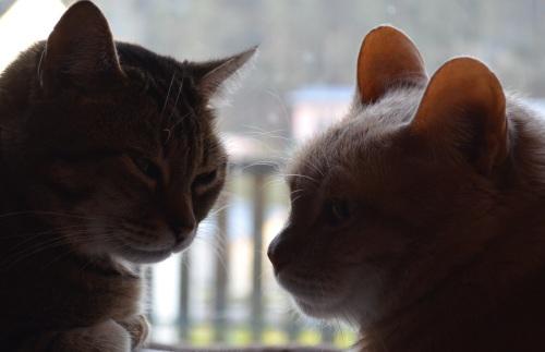 Milo und Sammy - Beste Kumpels