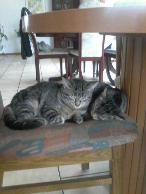 Joschi und Lilly müde getobt im neuen Zuhause